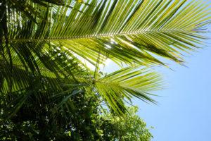 Four-Season-Seychellen-Beach-6